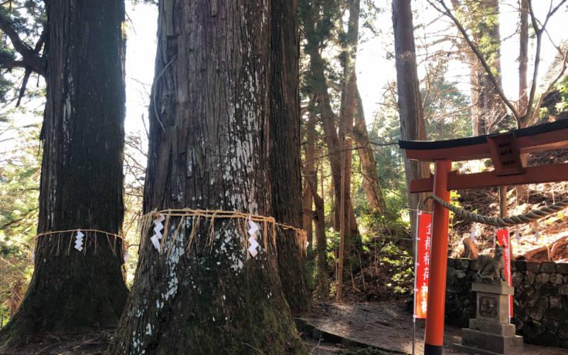 金櫻神社の杉の木
