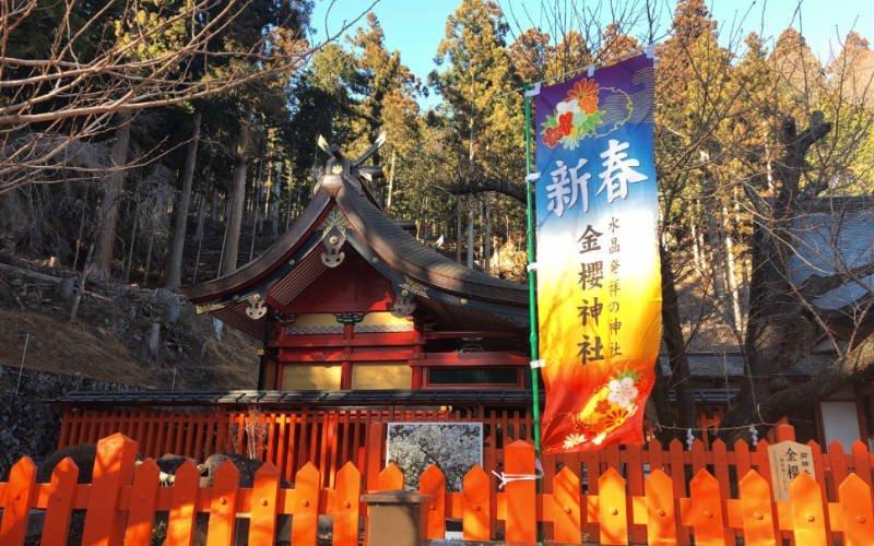 金櫻神社の御神木